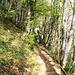 Ab Zilistock führt der grösste Teil des Weges durch den Wald.