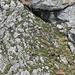 Gemsen können auch Steine ins Rollen bringen