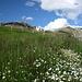 bei der Riederbergalm - hinten die Weißspitze