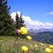 Fast Crah: [U Alpin_Rise] und gelber Ball