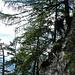 Ein ideal platzierter Baum: Ausgesetzte Passage am Hymy-Weg (Foto: [U Alpin_Rise])
