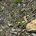 Ein Steingärtlein