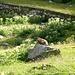 Una marmotta ci spia ...., alle sue spalle si vede il muretto della condotta che si segue fino quasi alla fine, nei pressi di un muro di sasso parte il sentierino che porta alla cresta. I bollini ci sono ma pochi e scoloriti