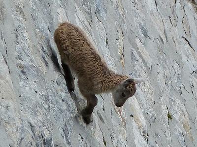 Cucciolo sul muro