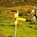 Rifugio Piano delle Creste - bettelnde Schafe