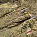 Tibetfahne auf Bocchetta di Fornasel - Erinnerungen an [u Floriano]