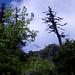 Das handliche Gipfelkreuz des Chli Mutzensteins kämpft mit den Bäumen um Vorherrschaft – jedoch nur aus dieser Perspektive