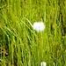 flora d'alta quota, al tatto sembra cotone, qualcuno conosce il nome?