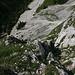 typisches Gras-Schrofengelände am anfang - unten die Höllentalangerhütte, das Weißbier mußte noch lange warten