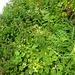 Viel Grün verspert den Weg