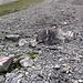Der Weg zur Gspaltenhornhütte ist hervorragend markiert