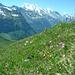 Blumenwiese am Sattelhorn
