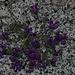 Piccoli fiori tra le rocce.