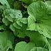 "Wo´s feucht war ""...wuchsen fette Pflanzen überall am Wegesrand..."""