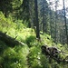 schöner Aufstieg zur Griesbergalm