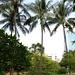 Kokospalmen auf dem Canning Hill