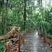 Weg in den Regenwald des Botanischen Gartens.