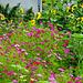 Blumenpracht in Ausserberg