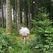 ..verschiedene Zeichen im Wald!