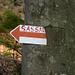 Sassawieviel? Baum frisst Schild