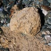 Unterhalb der Gletscherschliffplatten findet man zwischen  2700m und 2800m sehr viele veschiedene Gesteinsarten.<br /><br />Dieser Stein sieht wie erstarrte Lava aus, ist es aber sicherlich nicht. Vieleicht weiss ein Geologe mehr?