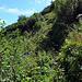 Die letzten dreihundert Höhenmeter des Schafweges sind etwas mühsam, durch viel Grünzeug und der Boden ist schmierig und rutschig