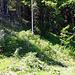 Der Ausstieg (bzw. Einstieg) vom Schafweg, das orange Fähnlein am Baum… Weiss nicht ob ich dies gefunden hätte, als Einstieg!? Nun, Nachgeher prägen sich das Bild ein!