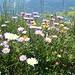 Flora auf dem Gonzen, wunderschön