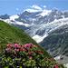 Au fond de la vallée, le Grosses Fiescherhorn