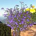 Un bel ceppo di fiori