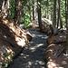 Licht und Schatten im Bergwald