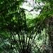 Riesige Farne sind im Regenwald oft zu finden