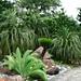 Szenerie im Evolution Garden. Dieser Teil des Botanischen Gartens thematisiert die Entwicklung der Pflanzen im Laufe der verschiedenen Epochen der Erdgeschichte.