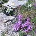 Blumenpracht am Giétro