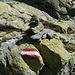 Ottima la segnaletica con frequenti marche in rosso-bianco-rosso, bolli gialli e ometti in pietra.