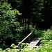 Idyllischer Abstieg im Wald