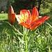 Wie heisst diese zauberhafte Blume?