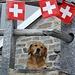 Swiss-Dog in der Cap. Albagno UTOE