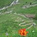 Feuerlilie mit Weg oberhalb Wärben
