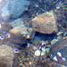Unterwasser Soldanella!!!