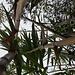 Canne di bambu': una risorsa molto pratica e versatile per diversi usi