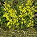 wasserliebende Pflanzen am Heido-Wasser