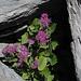 auch Pflanzen scheinen unter  Felsen Schutz  zu suchen
