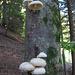 ...altri sugli alberi.