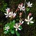 Hübsche Blümchen gedeihen auf einem mit Moos bewachsenen Geröllblöck. Ansonsten kommt der Botaniker auf dieser Tour allerdings nicht auf seine Kosten.