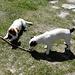 Niedliche Hunde auf der Hütte