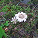 Salendo verso la Cascade du Rouget incontriamo funghi che sembrano fiori!