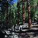 Im Aufstieg zwischen Nevada Fall und Sub Dome - Hier einer der typischen Wegabschnitte durch lichten Wald.