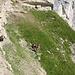 """Die Umgehung dieser Stelle durch Abstieg im Steilgras war auch nicht sehr erfolgreich, aber es gelang uns mit vereinten Kräften wieder rüber auf das erhöhte Band im Vordergrund zu queren.<br /><br />Den """"Ausflug"""" in das Gelände jenseits des Stollenloches würde ich mit T5 einstufen."""