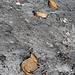 In der Falllinie des Skidepots schmilzt jetzt jede Menge an Müll aus dem letzten Jahrhundert aus - kann spannend sein